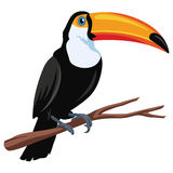 Toucan Bird Vector Illustration. Flat Design Stock Photography