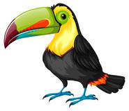 Toucan bird on white background Stock Photography