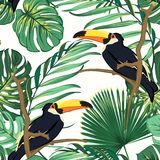 Toucan birds natural habitat in exotic tropical jungle rainforest fern greenery. Vivid bright green seamless pattern. Toucan birds natural habitat in exotic vector illustration