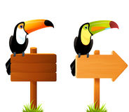 Toucan birds sitting on a signboard Royalty Free Stock Photo