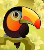 Toucan on the  branch Stock Images