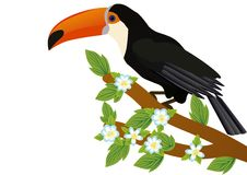Toucan on a branch with flowers Stock Images