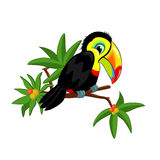 Toucan on branch. Funny Toucan on a branch with leaves and tropical fruits isolated on white background Stock Image
