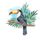 Toucan on branch. Watercolor illustration 4. Hand drawn watercolor bird on branch Stock Photo