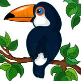 Toucan Character on a Branch Royalty Free Stock Photo