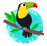 Toucan Clip-Art Royalty Free Stock Images