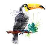 Toucan d'aquarelle de vecteur Image stock