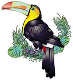 Toucan. Decorative illustration of toucan in white background Stock Image