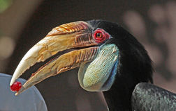 Toucan stock photography