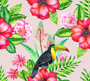 Toucan et cammelias, patern sans couture tropical Image libre de droits