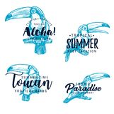 Toucan exotic bird vector sketch lettering vector illustration