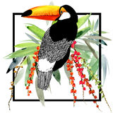 Toucan. Exotic nature background. tropical plant. Stock Photos