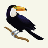 Toucan exotic tropical bird Royalty Free Stock Images