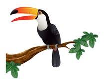 toucan fågelillustration Arkivbild