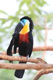 toucan fakturerad kanal arkivfoto