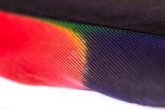 Toucan feather close up Stock Image