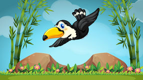 Toucan flying over the field. Illustration Stock Photos