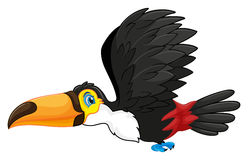 Toucan flying in the sky Stock Images