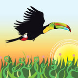A Toucan flying into sunset. Illustrated Toucan that flies above green meadows into the sunset Stock Photo