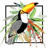 Toucan Fundo exótico da natureza Planta tropical ilustração royalty free
