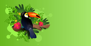 Toucan on green background Stock Photo