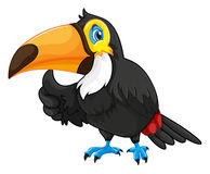 Toucan with happy face Stock Photo