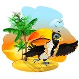Toucan in Hawaii Stock Image