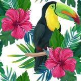 Toucan, hibiscus, watercolor Stock Photography