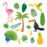 Toucan, hummingbird and flamingo. Summer tropical graphic. Elements. Flat design. Jungle floral background. Jungle birds. Banana, pineapple, palma. Vector Stock Images