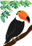 Toucan illustration Stock Photos