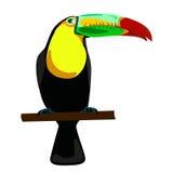 Toucan illustration. On white background Stock Photography