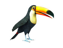 Toucan, Isolated On White Background. A beautiful portrait of a toucan on a white background royalty free illustration