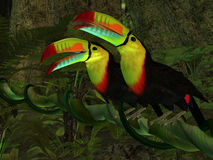 Toucan Jungle Stock Photos