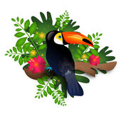 Toucan with jungle leaves Royalty Free Stock Photos