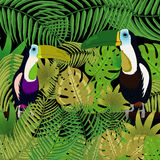 Toucan in the jungle Stock Photography