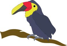 Toucan on a Limb Royalty Free Stock Images