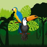 Toucan and macaw birds. Over jungle background. colorful design. vector illustration Stock Photography