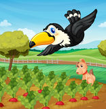 Toucan over farm. Toucan and a dog in a farm Royalty Free Stock Image