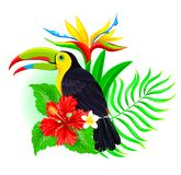 Toucan with palm leaf and hibiscus Royalty Free Stock Image