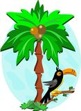 Toucan and Palm Tree Royalty Free Stock Photos