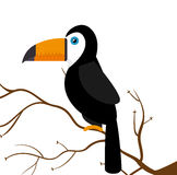 Toucan parrot brazil on branch Stock Photography