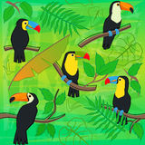 Toucan Pattern Stock Photography