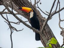 toucan perched on the branch of the tree