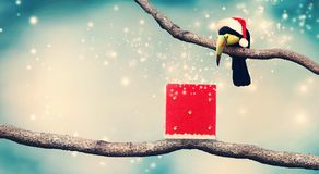Toucan with Santa hat and Christmas present Royalty Free Stock Image