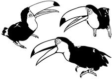 Toucan Set Stock Photos