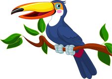 Toucan sitting on tree branch Royalty Free Stock Photography