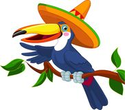 Toucan with sombrero. Illustration of toucan with sombrero sitting on tree branch vector illustration