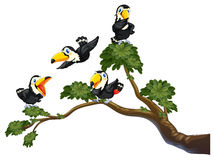 Toucan and tree Royalty Free Stock Image
