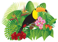 Toucan in Tropical Forest with Foliage and Flowers Color vector Stock Image