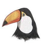 Toucan watercolor  bird vector Royalty Free Stock Images